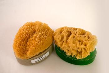 soap with sponge